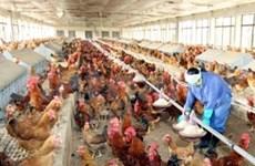 美国资助170万美元协助越南处理禽流感危机