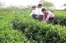 越南大力促进北部山区、丘陵地区经济一体化