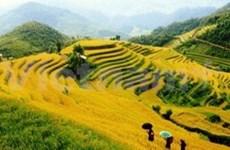 越南北方山区的梯田耕作文化