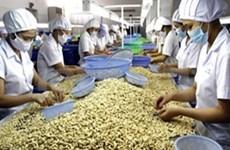 越南腰果仁出口总额保持增长势头