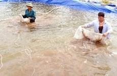 广宁云屯注重发展水产养殖业