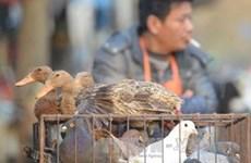 H7N9甲型禽流感传入越南境内的风险极高