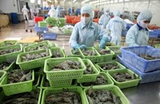 越南对中国的虾类出口额猛增