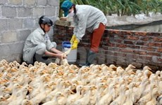 政府总理签发关于加强禽流感防控工作的紧急公函
