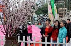 樱花节将在越南广宁省下龙市一年一度举行