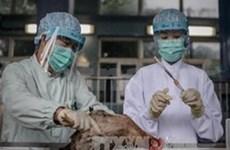 FAO:中国H7N9禽流感疫情可能蔓延越南