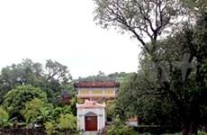 富安省慈光寺20棵芒果树被列入越南遗产树名录