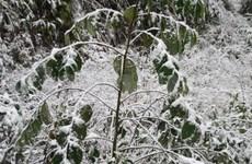 老街省继续出现雨雪天气