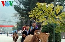 越南河江省苗旺县独特的家畜集市