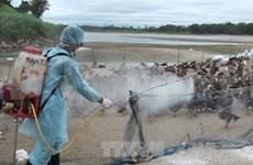 越南加大禽流感疫病预防工作力度
