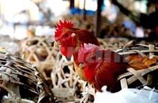 越南21个省出现禽流感疫情