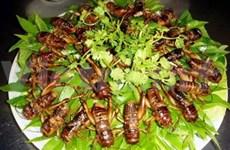 越南:河内的昆虫美食菜肴