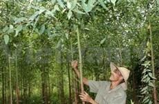 越南首次举行第一届社区林业国家论坛