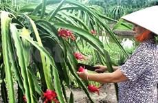 越南同奈省农产品进军国际市场