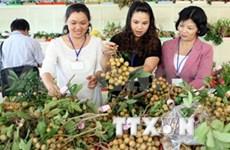 2014年第14届槟椥省精品水果节拉开序幕