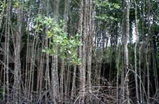 越南加强国际合作应对气候变化