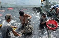 越南政府副总理武文宁:金瓯省应继续发挥本省水产养殖优势