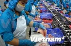 越南查鱼出口企业需注重产品质量