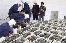 越南虾类出口额同比增长59%
