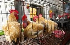 越南发现新种禽流感病毒