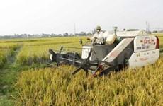 越南采取措施增加向以色列市场出口农产品
