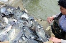 越南芹苴市提出2020年水产品出口总额达20亿美元的目标