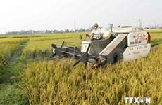 越南:77万美元用于减少农业温室气体排放量