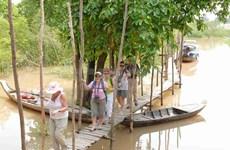 越南安江省力争打造茶师白千层树林生态旅游区