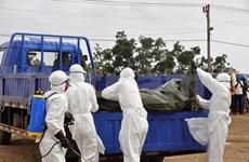 世卫组织敦促东亚-太平洋地区各国加强应对埃博拉的防控措施