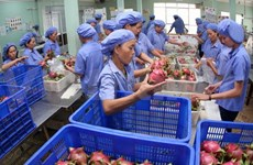 越南水果走出国门 稳步进军世界各国市场