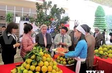 """越南和平省高峰县""""高峰橙""""获地理标志证书"""