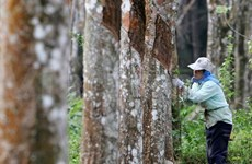 马来西亚与泰国加强橡胶领域的合作