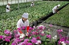 越南广宁省与台湾加强农业合作