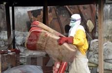 世卫:全球疟疾死亡人数大幅下降