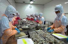 2014年越南虾类出口额创历史新高