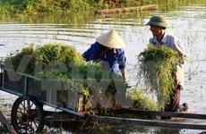 越南同奈省成为全国新农村建设领头羊