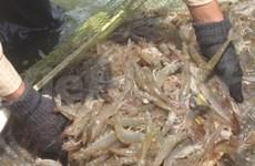 美国商务部对越南海虾修改反倾销法