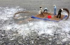 越南参加在斯里兰卡举行的亚洲渔业与水产养殖部长会议