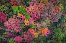 组图:高平省边境地区美不胜收的冬日美景