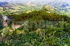 组图:在安明松树林—岩石高原中的绿色草原中漫游