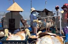 越南水产业走向大海 为推动海洋经济发展注入动力