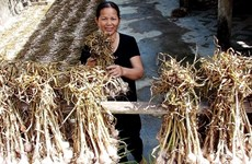 """广平省""""一乡一品""""项目取得初步结果 助力提高农业和手工业产品质量"""