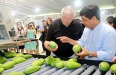 越南庆和省甘林县芒果恢复出口活动
