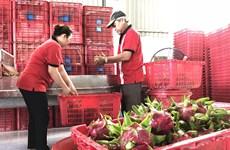 越南-中国(上海)水果制品线上会议吸引双方约40家企业参加