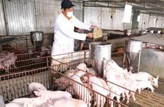 农业与农村发展部副部长冯德进:今年农林水产品出口额将达400亿多美元