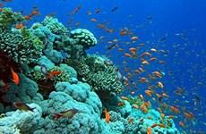 强化下龙湾海上珊瑚礁生态系统修复和保护工作