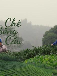 [Mega Story]打造驰名品牌  恢复发展传统的球江茶区