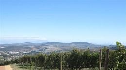 南非公司对越南出口新鲜葡萄