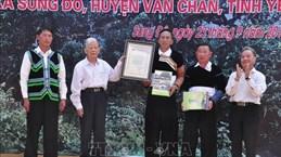 江鹏山雪茶树被列入越南遗产树名录