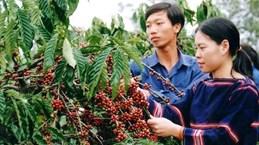 越南得乐省唤醒企业的创业精神